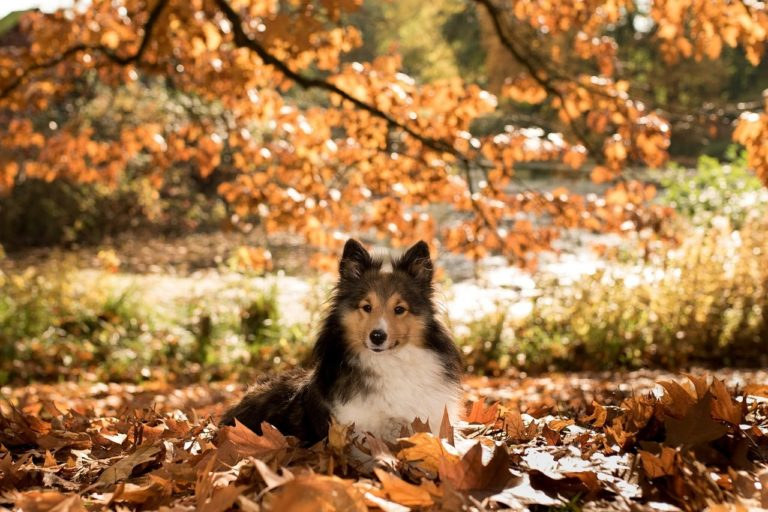 Happy fall to all the pets