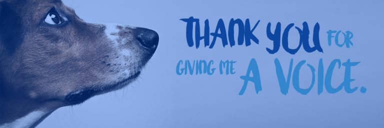 Thank you for giving me a voice at MedVet
