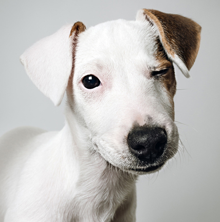 cut dog with two different colored ears