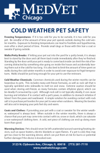 Cold Weather Pet Safety -- Tips From the Emergency Veterinary Staff at MedVet Chicago for Keeping Pets Safe in the Cold Weather