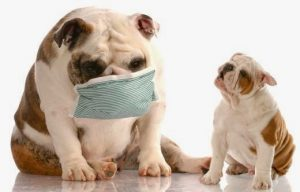 Canine Flu - What You Need To Know