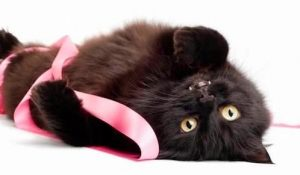 Mammary Cancer In Dogs and Cats