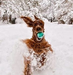 Keeping Pets Active in Winter Months