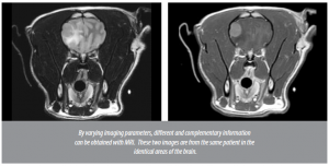 Magnetic resonance imaging (MRI) in dogs and cats
