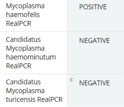Figure 4. RealPCR testing in 3-year-old anemic cat.