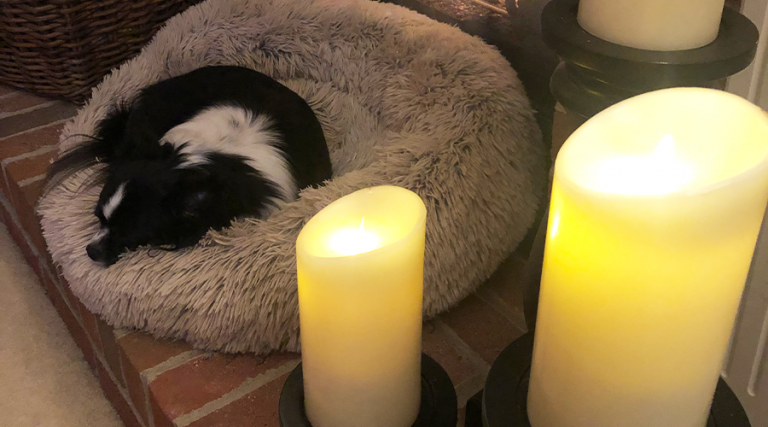 Pet Valentine's Day - Flameless Candles with dog
