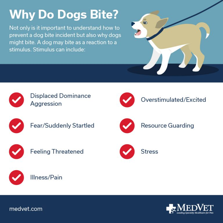 Preventing Dog Bites - Why Do Dogs Bite