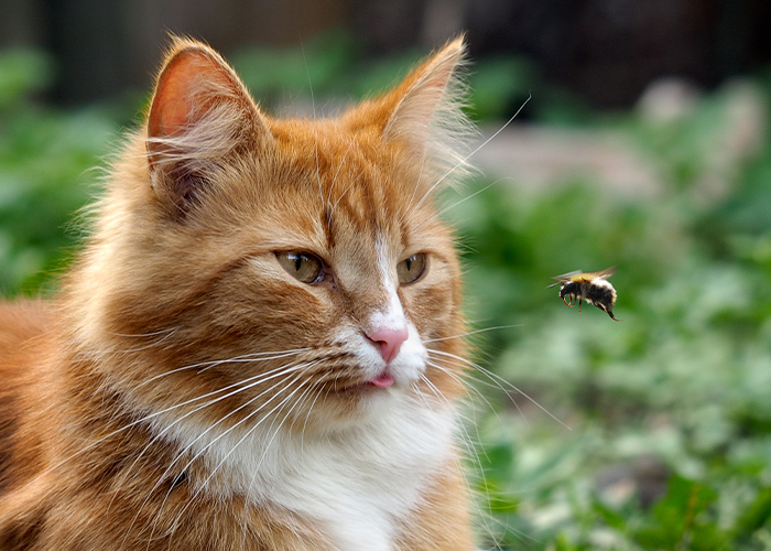 Pet First Aid - Cat looking at bee