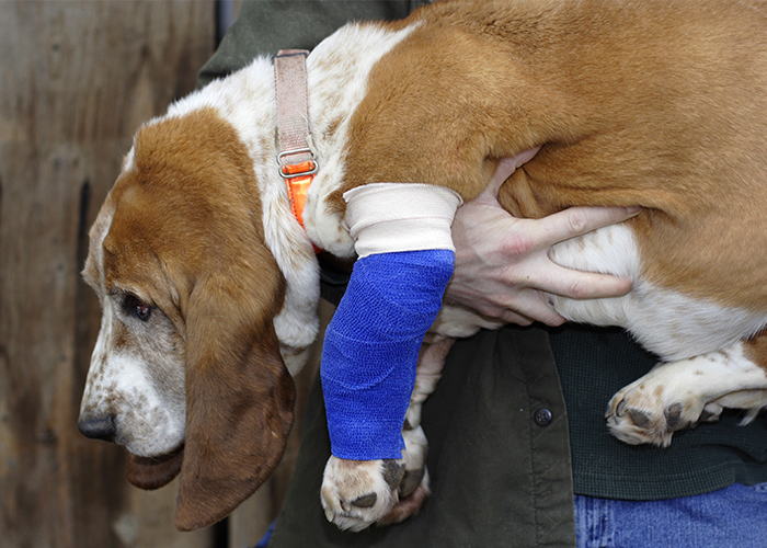 Pet First Aid - Wounded dog being carried