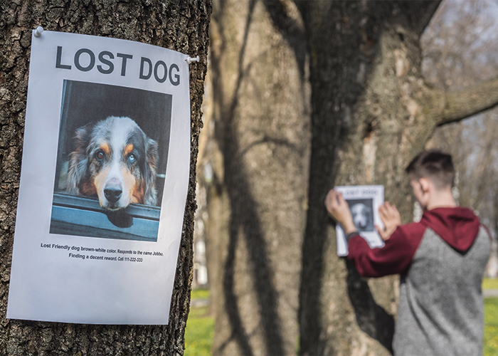 Pet ID - Lost Dog Posters