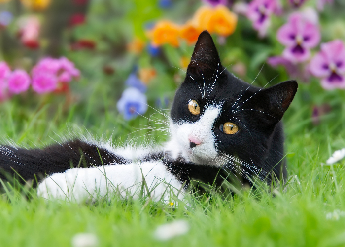 Spring Pet Safety - Cat laying in grass with flowers