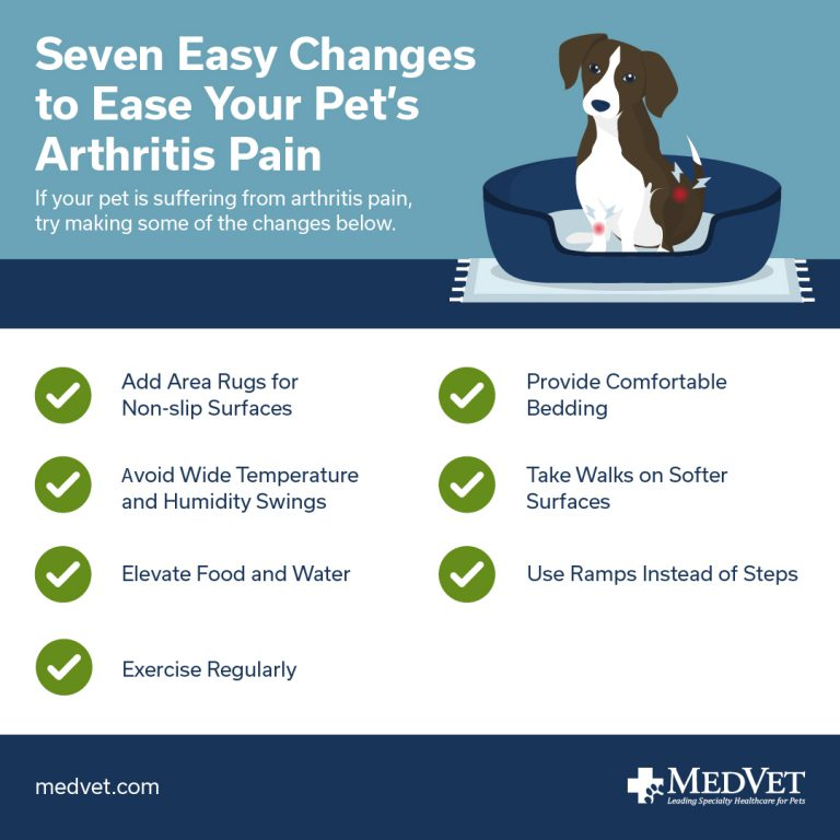 Managing Arthritis in Cats and Dogs - How to Ease Your Pet's Arthritis Pain