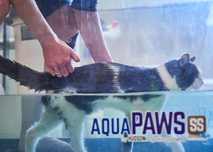 Managing Arthritis in Cats and Dogs - Cat walking on water treadmill