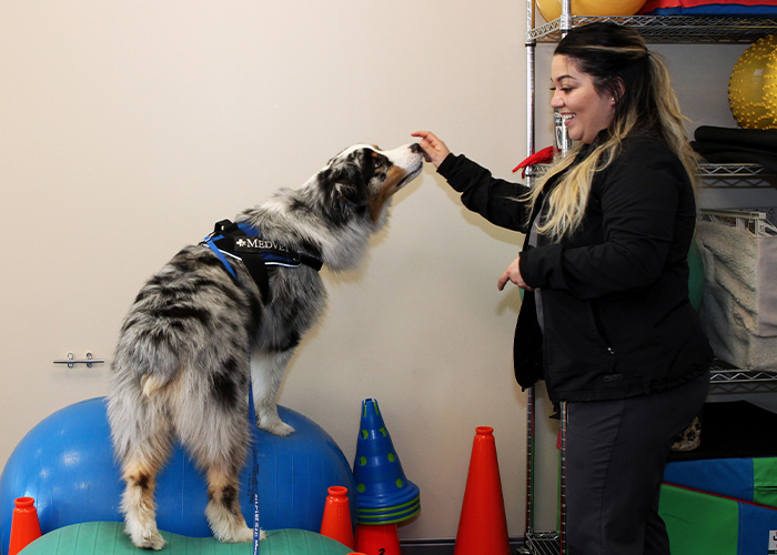 Managing Arthritis in Cats and Dogs - Dog in rehabilitation therapy