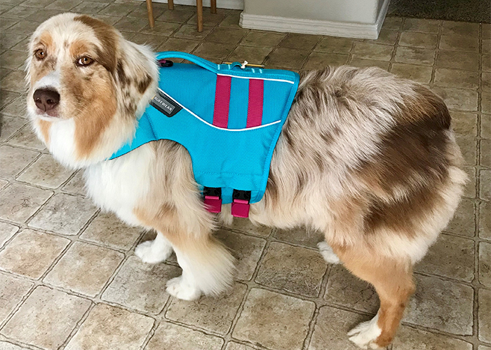 Pet Water Safety - Dog in Life Jacket