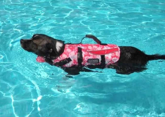Pet Water Safety - Dog swimming in pool