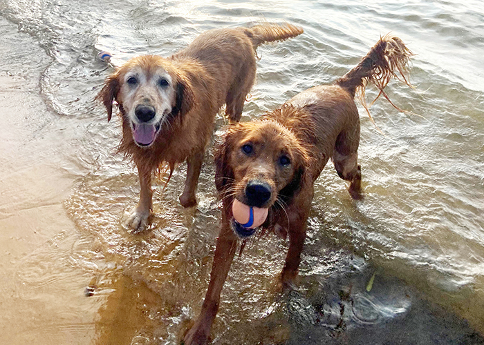 Pet Water Safety - Dogs at the beach