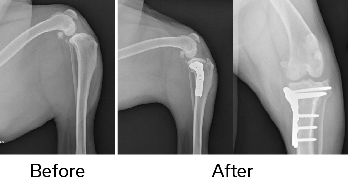 TPLO Surgery - Before and after X-ray