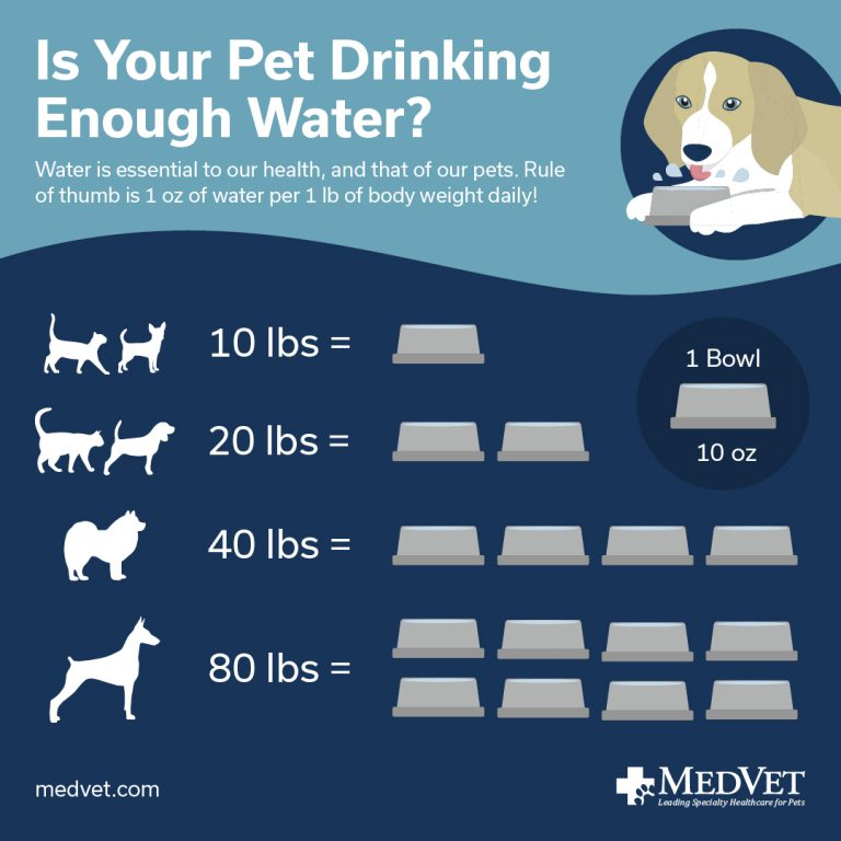 Is your pet drinking enough water?
