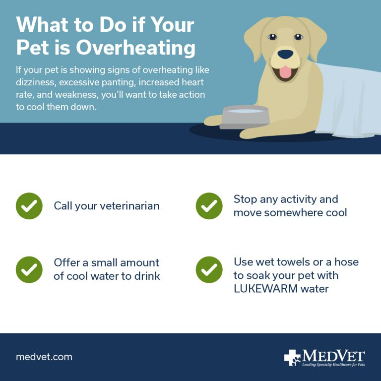What to do if your pet is overheating