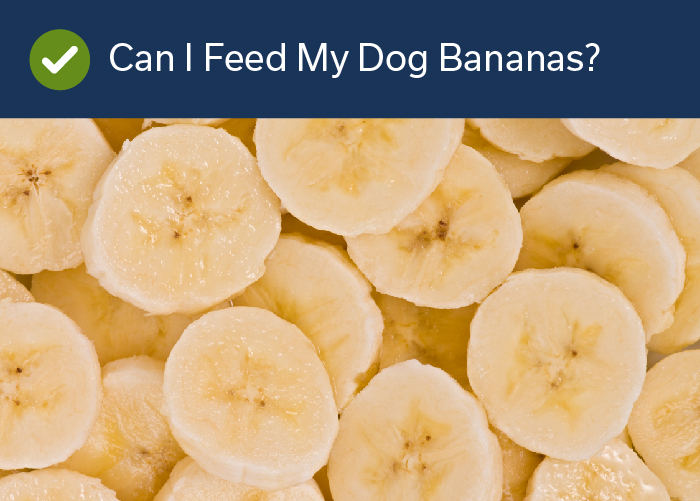 Fruits Your Dog Can Eat -Bananas