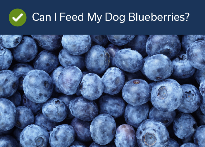 Fruits Your Dog Can Eat -Blueberries