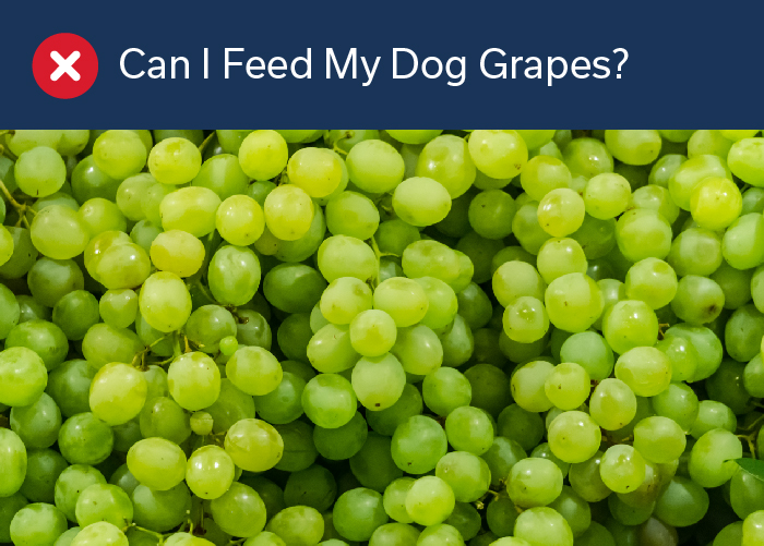 Can I Feed My Dog Grapes