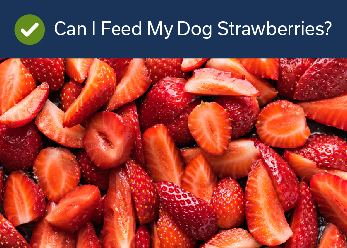 Fruits Your Dog Can Eat -Strawberries
