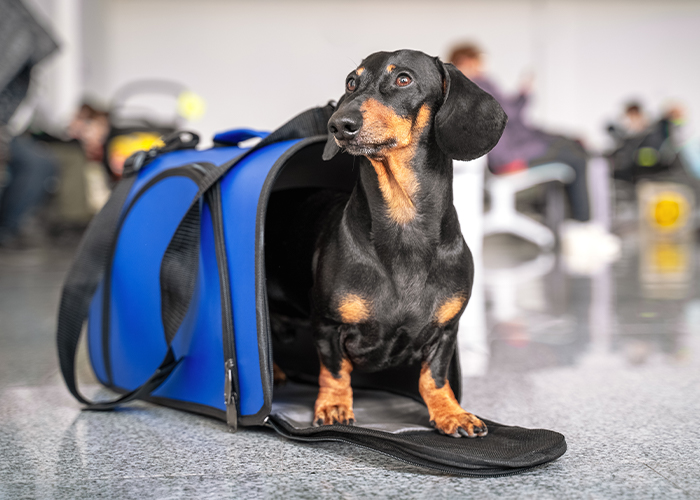 Pet Travel Safety - Dog at airport