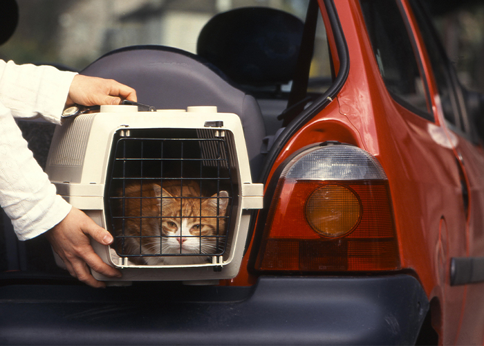 Pet Travel Safety - Person putting cat in a crate into the car