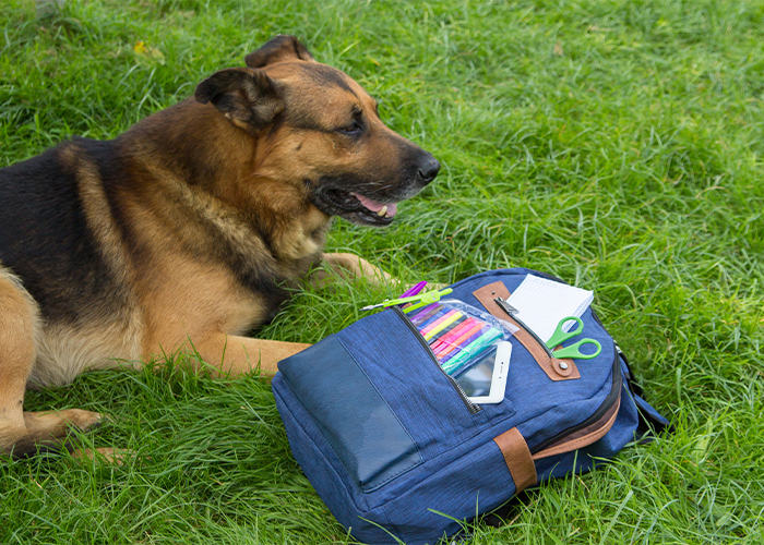 back to school pet safety