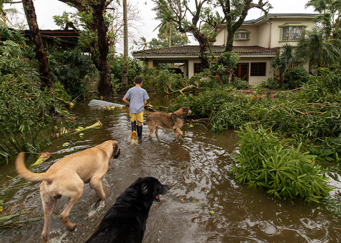 Disaster Preparation and Your Pet - Storm Damage