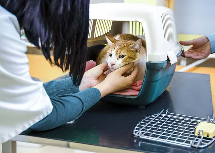 How to Help Your Cat Have Stress-Free Vet Visits - Cat in carrier at vet