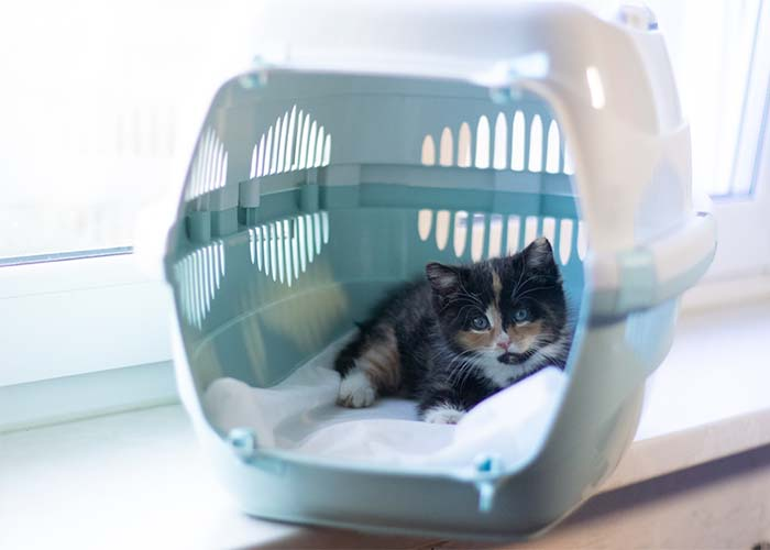 How to Help Your Cat Have Stress-Free Vet Visits - Kitten in carrier