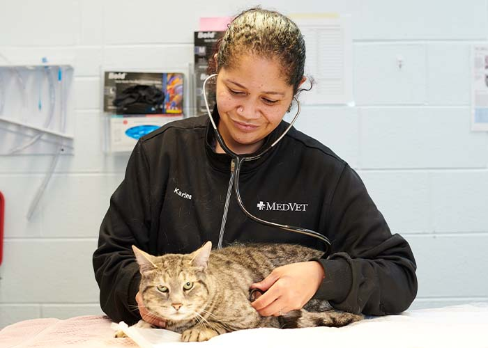 How to Tell If Your Pet Is in Pain and What You Can Do to Help - Examining Cat