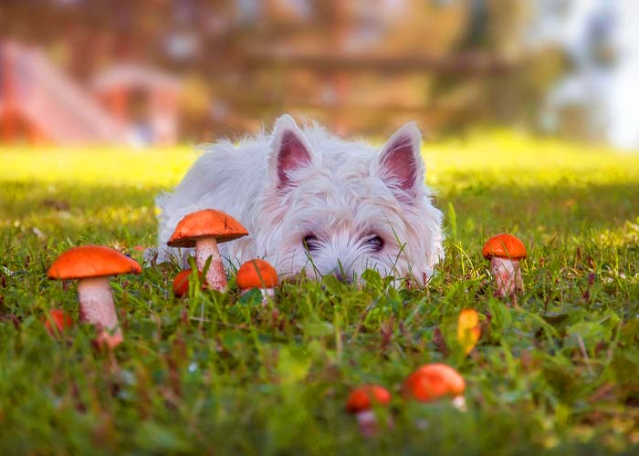 Pet Fall Safety - Dog by mushrooms