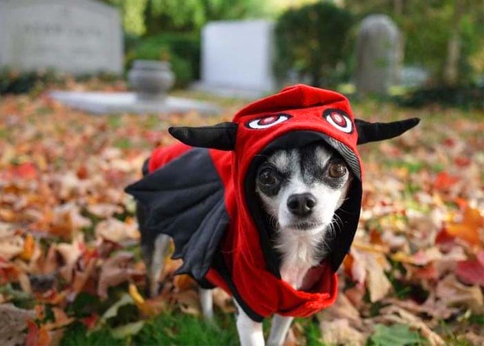 Pet Fall Safety - Dog in costume
